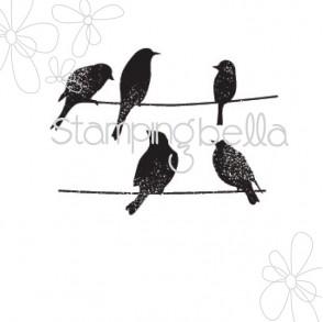 thinking birds