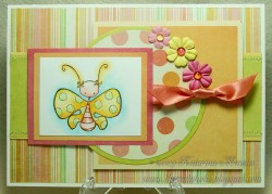 Kathy used PAPILLON KETTO
