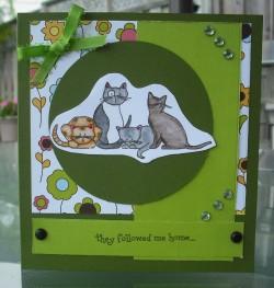 Nancy Delenardo used ATTITUDY CATS