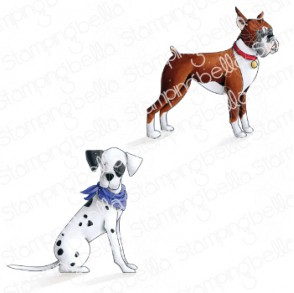 Boxer and Dalmation